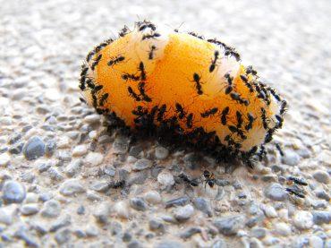 Sposoby na mrówki w domu – poradnik