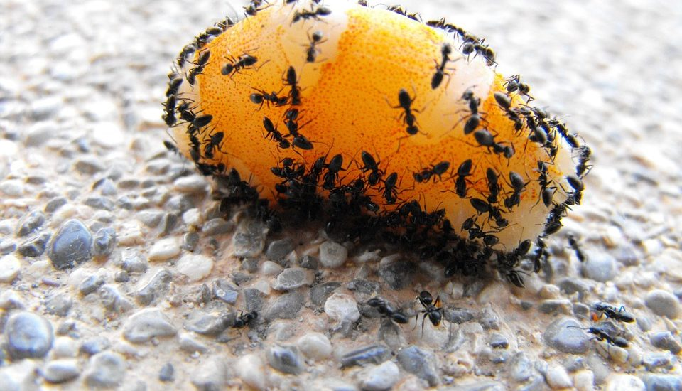 Sposoby na mrówki w domu