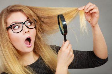 Budowa włosa – czyli z czego składa się włos