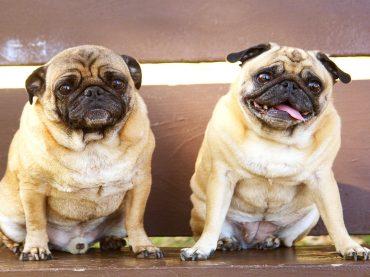 Na co zwrócić uwagę kupując sweter dla psa?