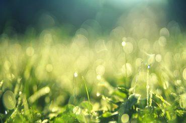 Jak wybrać kosę do koszenia trawy?